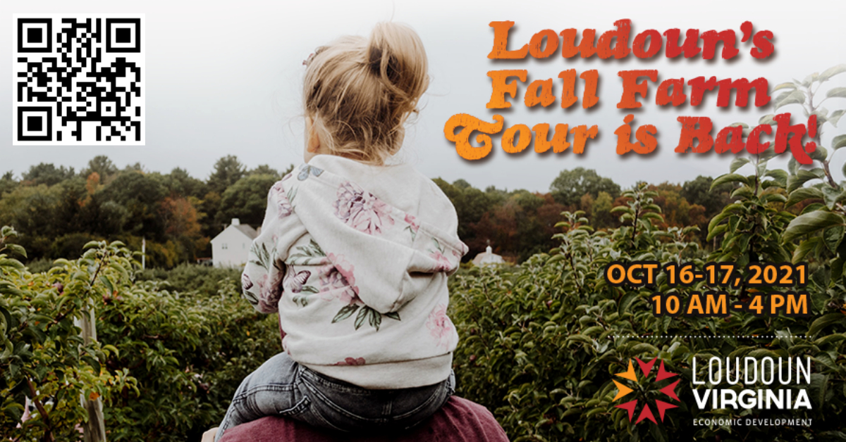 girl on shoulders of man in farm while at loudoun fall farm tour